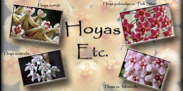 Hoyas etc.