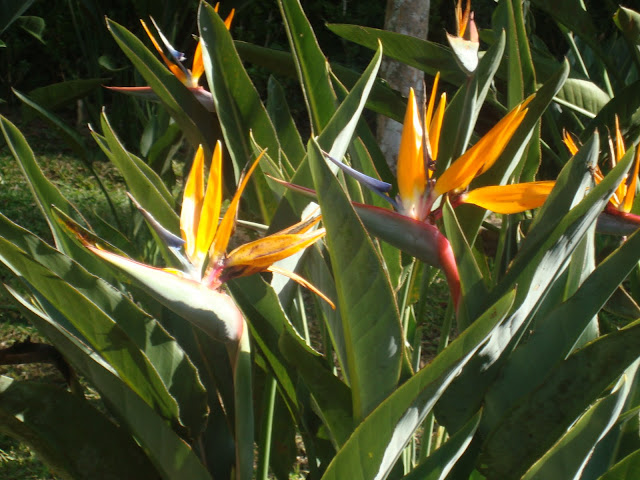 """flores coloridas jardim:Um dia Tudo será Arte, e todos nós seremos Artistas """" (Cloude Monet"""