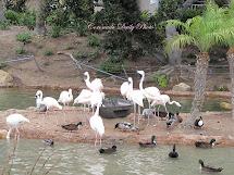 Coronado Daily Flamingos And Ducks