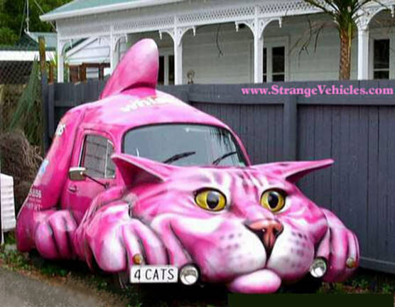 Funny Cat Car | Pet Gide and Photo