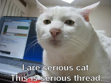 funny cat quotes. Really Funny Quote