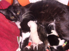 Luci and her kittens  April, 2008