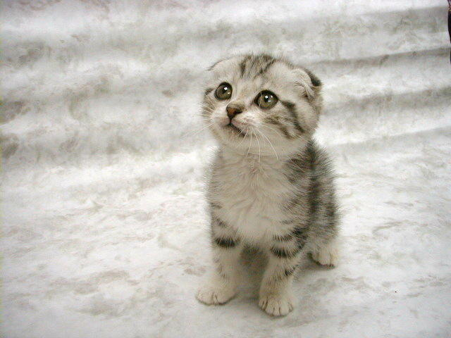 gambar kucing lucu terbaru - gambar kucing