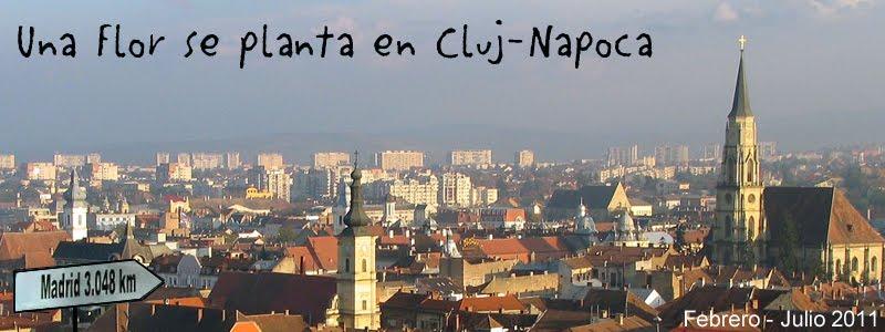 Una Flor se planta en Cluj