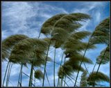Blowing in the wind...