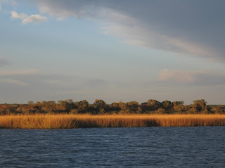Click to see Golden Marsh Grasses