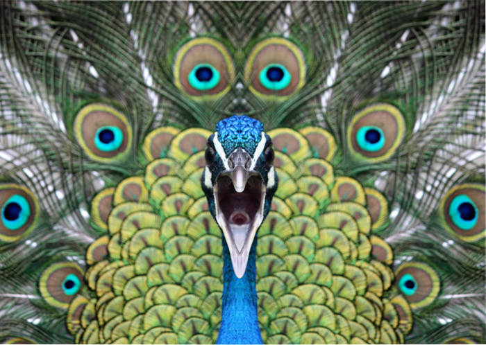 Sabias moralejas y f bulas para reflexionar taringa - Fotos de un pavo real ...