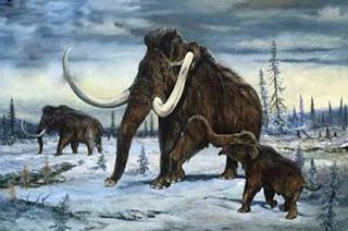 El mamut, sus grandes colmillos y huesos son de los más cotizados en este nuevo mercado de antiguedades