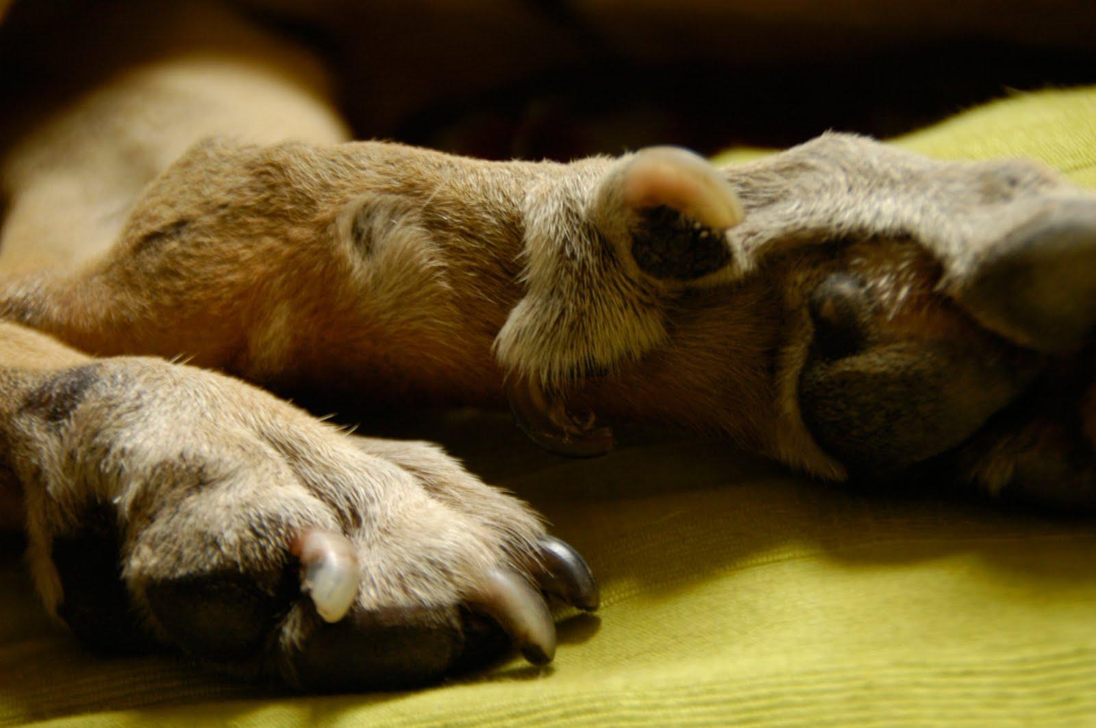 real dog hind paw