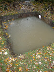 Flooded Root Cellar