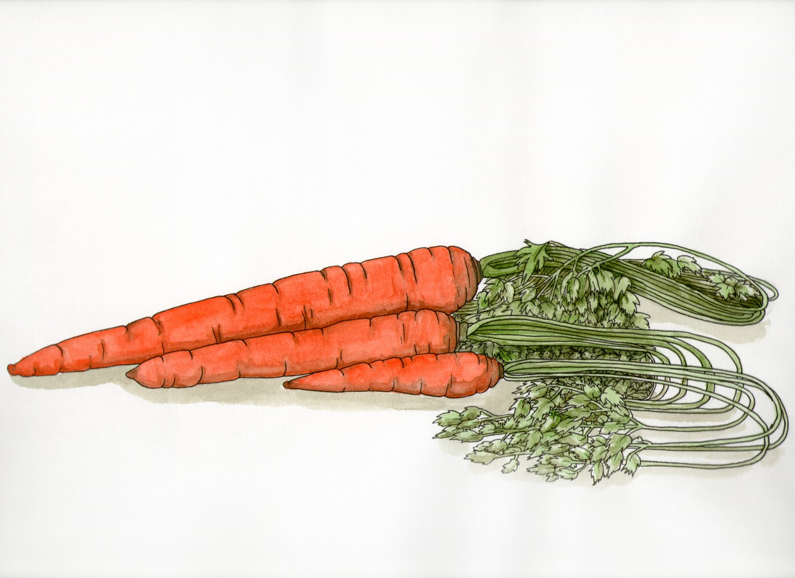 Pin dessin de carotte on pinterest - Dessin de carotte ...