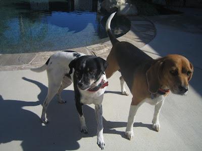 beef jerky dogs