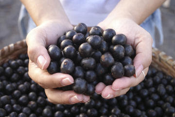acai berry weight loss myth
