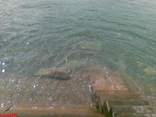 Dem Bodensee auf den Boden sehen