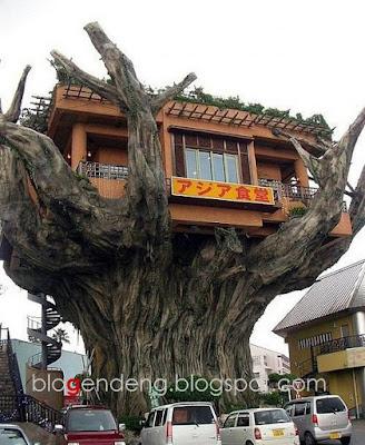 http://3.bp.blogspot.com/_duILjI1E5Xc/SMbDRh7I3UI/AAAAAAAAAIY/woJrXbFmS1o/s400/rumah+pohon+copy.jpg