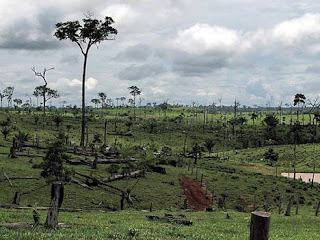 Deforestation is a major environmental problem in southern Chad.