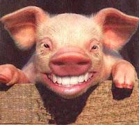 rir porco engraçado
