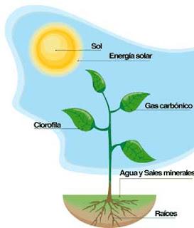 procesos anabolicos quimiosintesis y fotosintesis