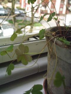 balkon ve çiçek