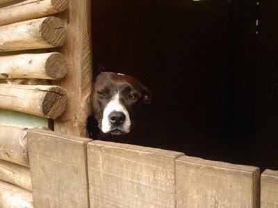 üzgün bakan köpek