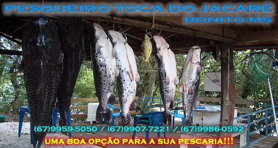 PESQUEIRO TOCA DO JACARÉ BONITO-MS               (67) 99595050 / 9907 7221 / 9986 0592
