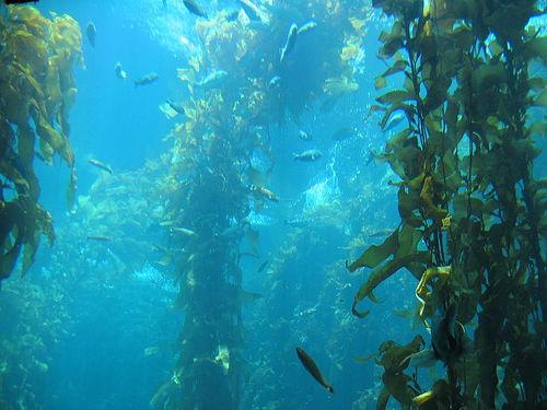 Animales y plantas marinas (megapost)