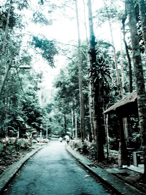 sungai congkak recreational forest