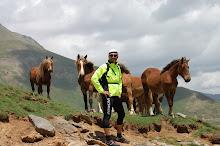 "Cavalls ""salvatges"""