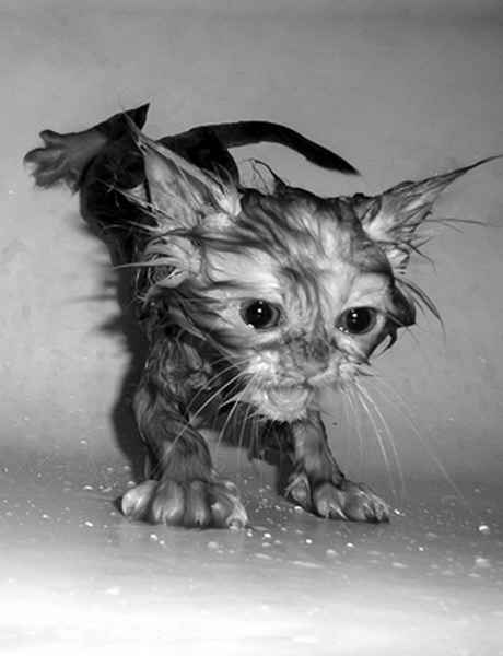 [cat3.aspx]