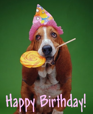a basset hound wearing a party hat and holding an allday sucker in his mouth