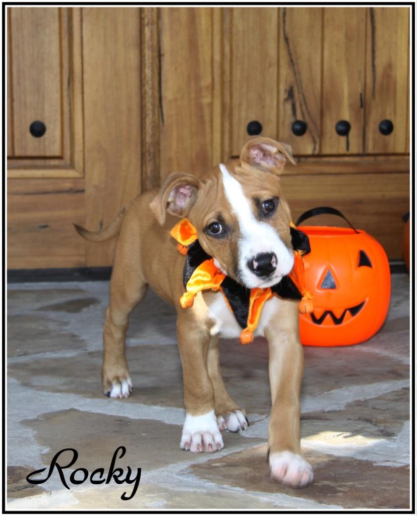 Fiona Rescue Dog Update