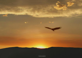 soar high beyond the sky Beyond the freshly cut hedgerow a blue sky grades to near white towards the horizon image ©les cowley blue skies make the heart soar and poets rush for quill and ink.
