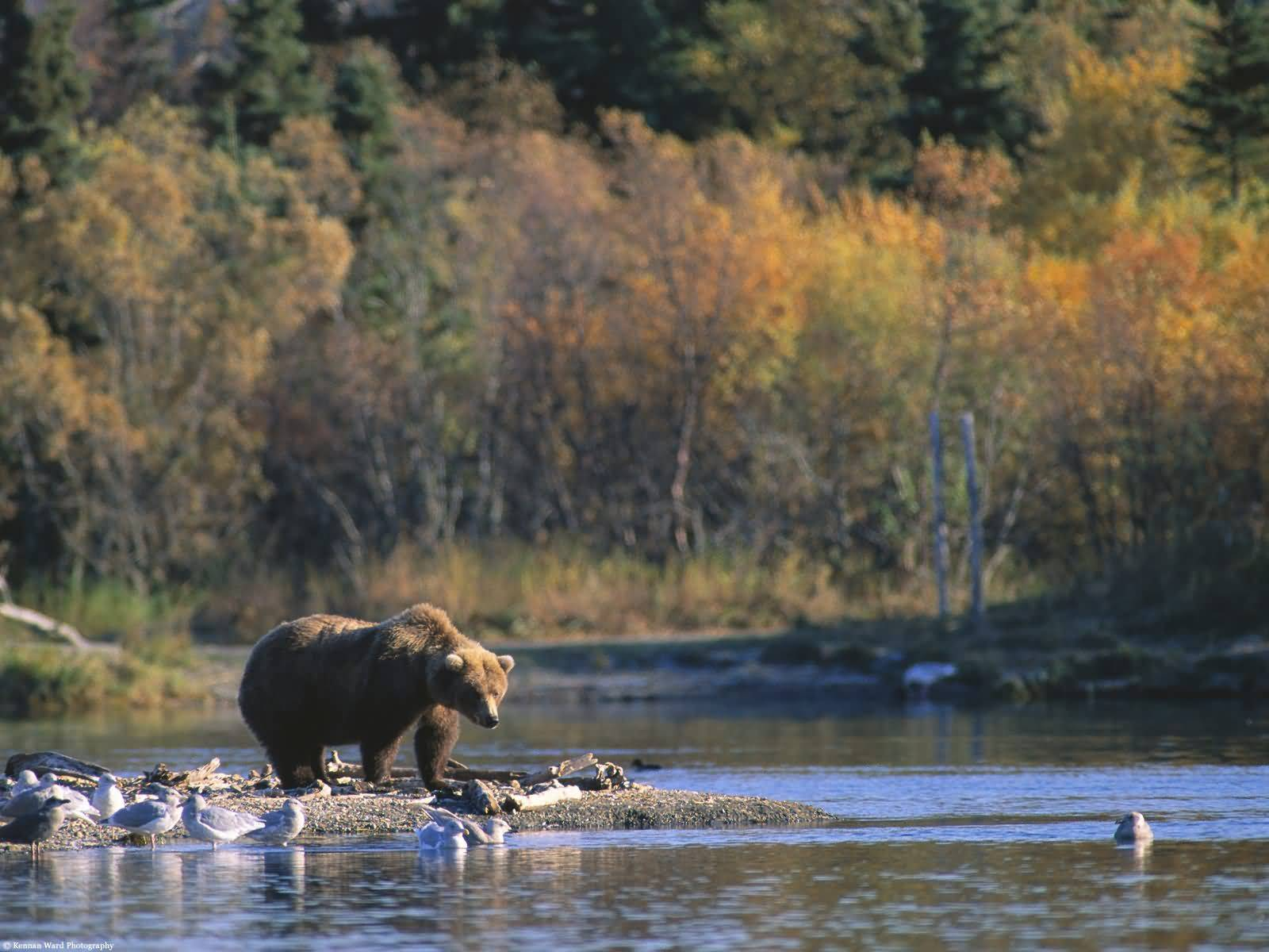 The Beauty Of Alaska Sightseeing For Holiday Vacations
