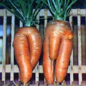 Секс с овощями