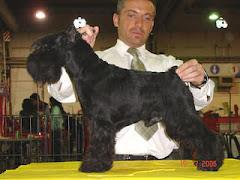 Gloris Jack-Naif (padre de los cachorros)