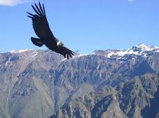 Visão do Condor
