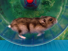 One of the Hamsters