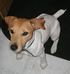 Scout- Joels Doggie
