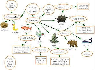 MAPA CONCEPTUAL DE LOS ANIMALES