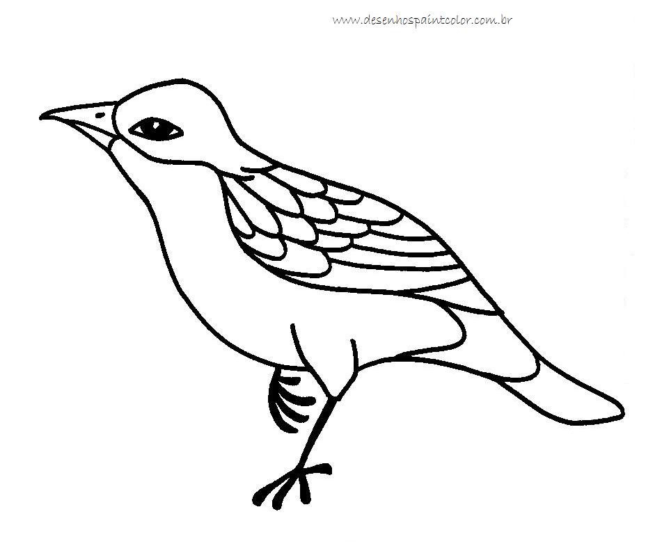 Desenho de pass ro para imprimir e colorir desenhos para - Paint para pintar ...
