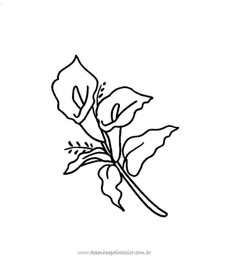 desenho+de+flor-copo+de+leite+para+imprimir+e+colorir.www