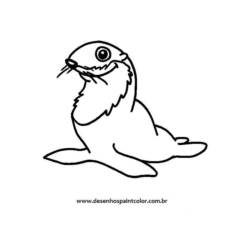 colorir desenho foca desenhos para colorir