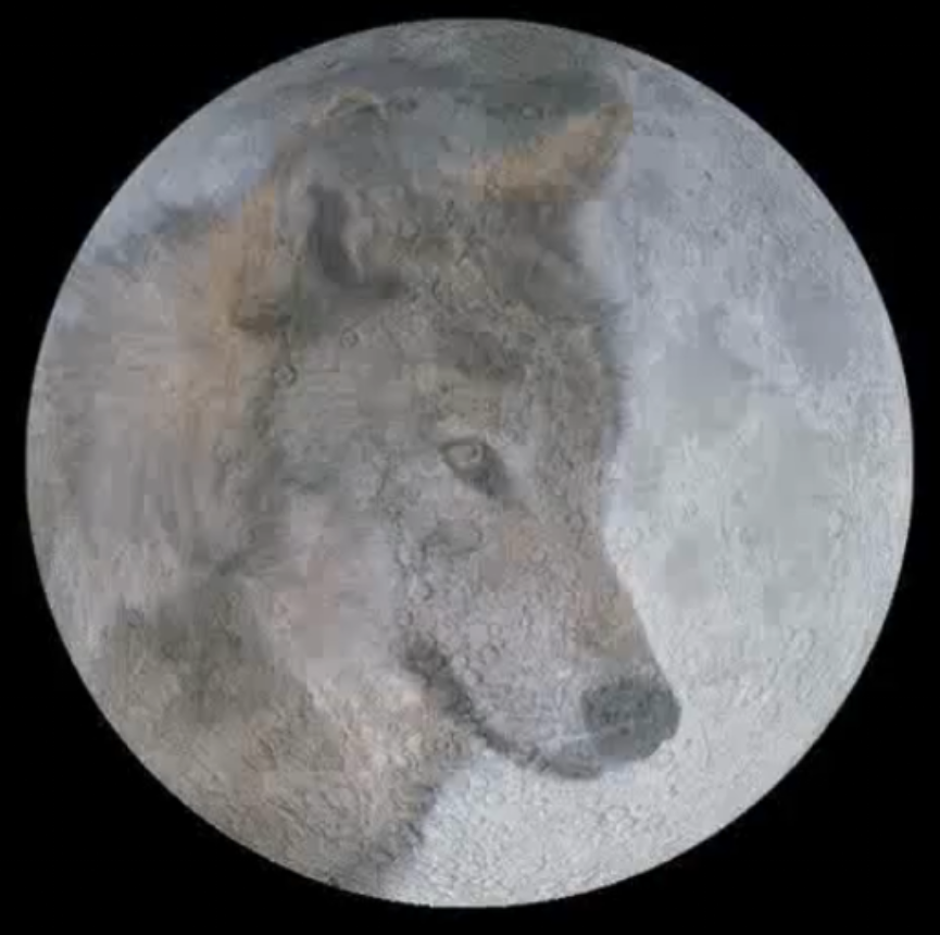 Lobos aullando a la luna llena - Imagui