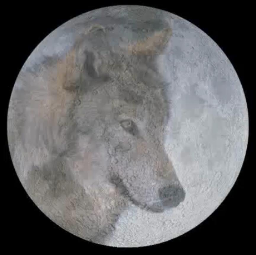 ... noches de enero cuando ven a las manadas de lobos aullando a la luna
