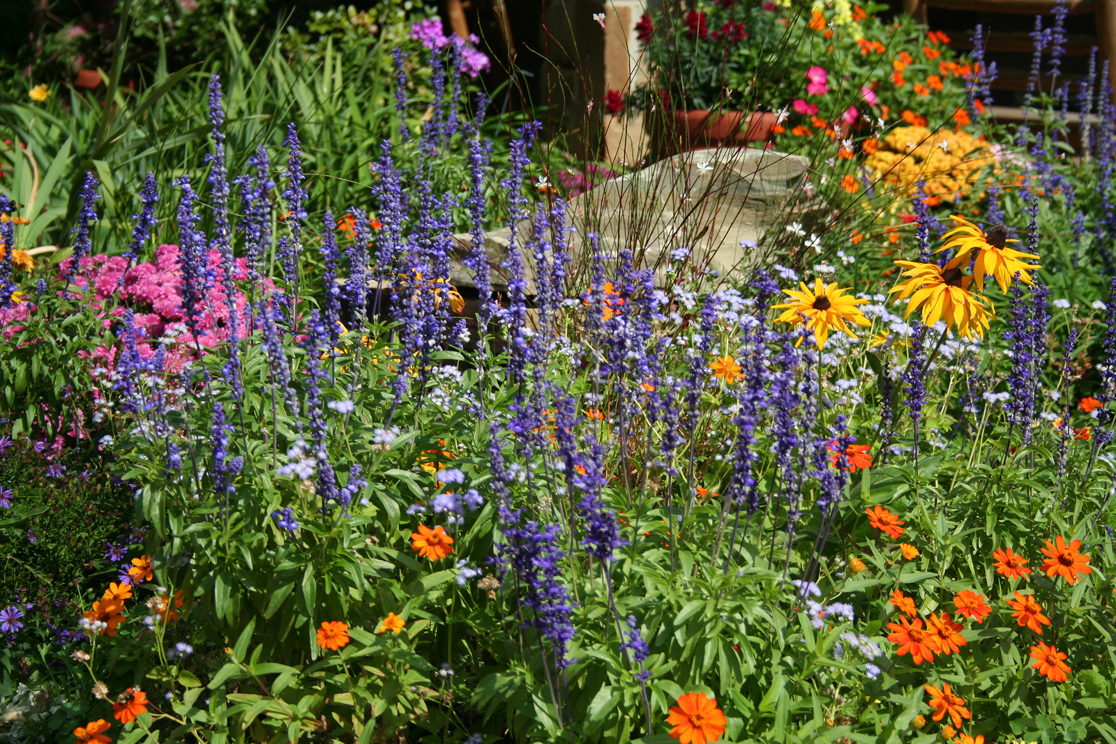 Garden flowers pictures beautiful flowers for Perennial flower bed design