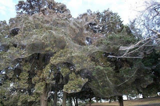 monster spider web