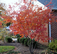 fall tree color