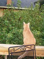 Cat and chipmunk