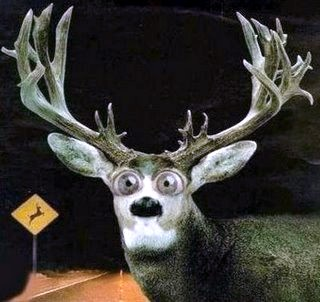 Deer-in-Headlights.jpg