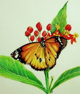 Sketches of nature colour butterfly flowers wallpapers